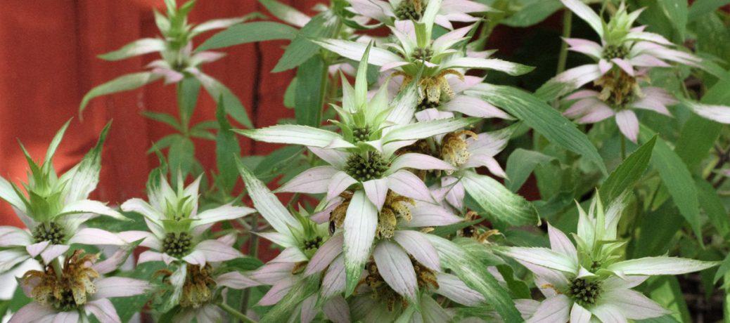 Nio fina blommor för september